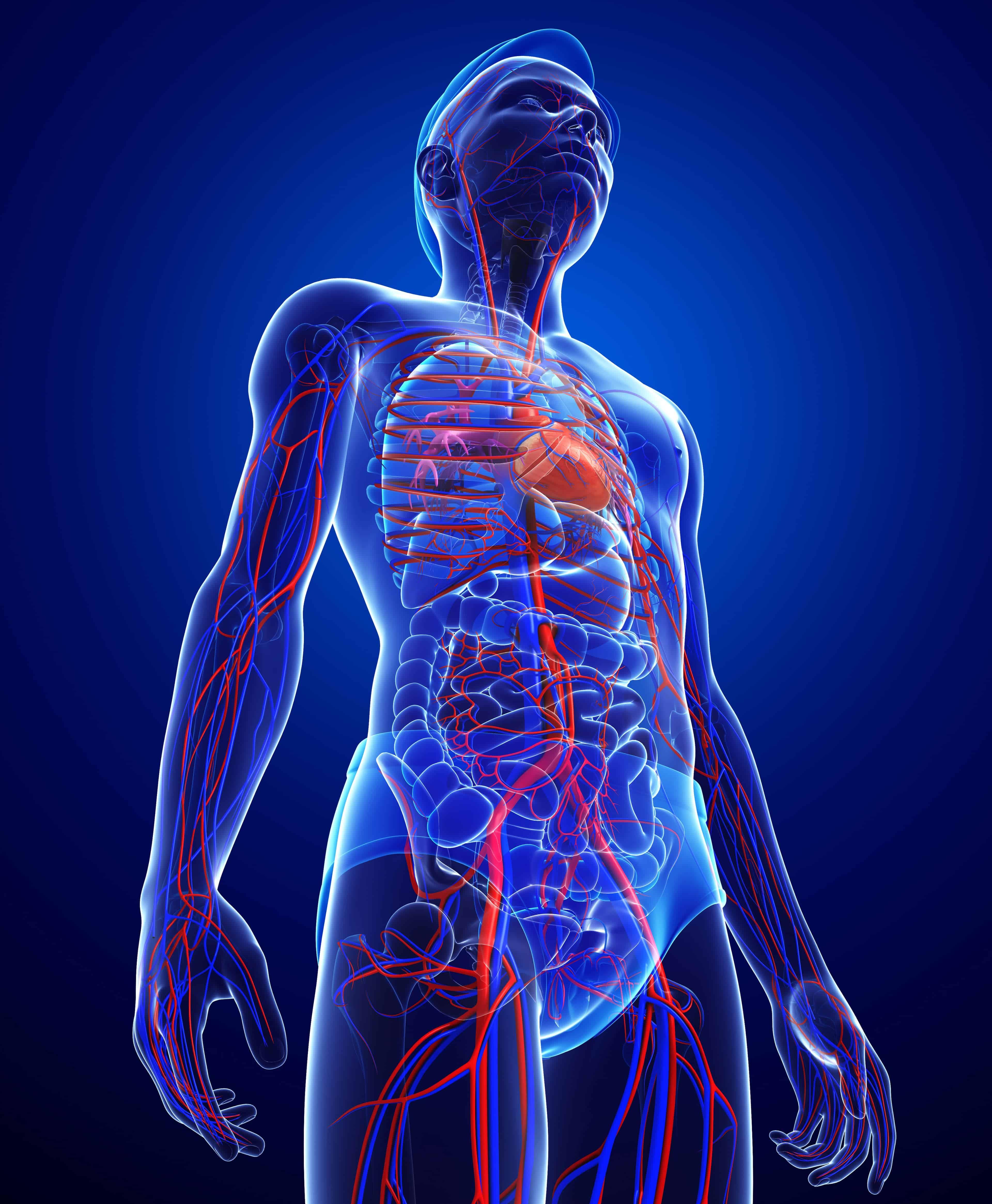Choroby układu krążenia (nadciśnienie tętnicze, miażdżyca, niewydolność krążenia)